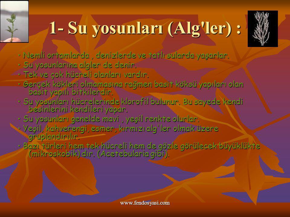 1- Su yosunları (Alg ler) :
