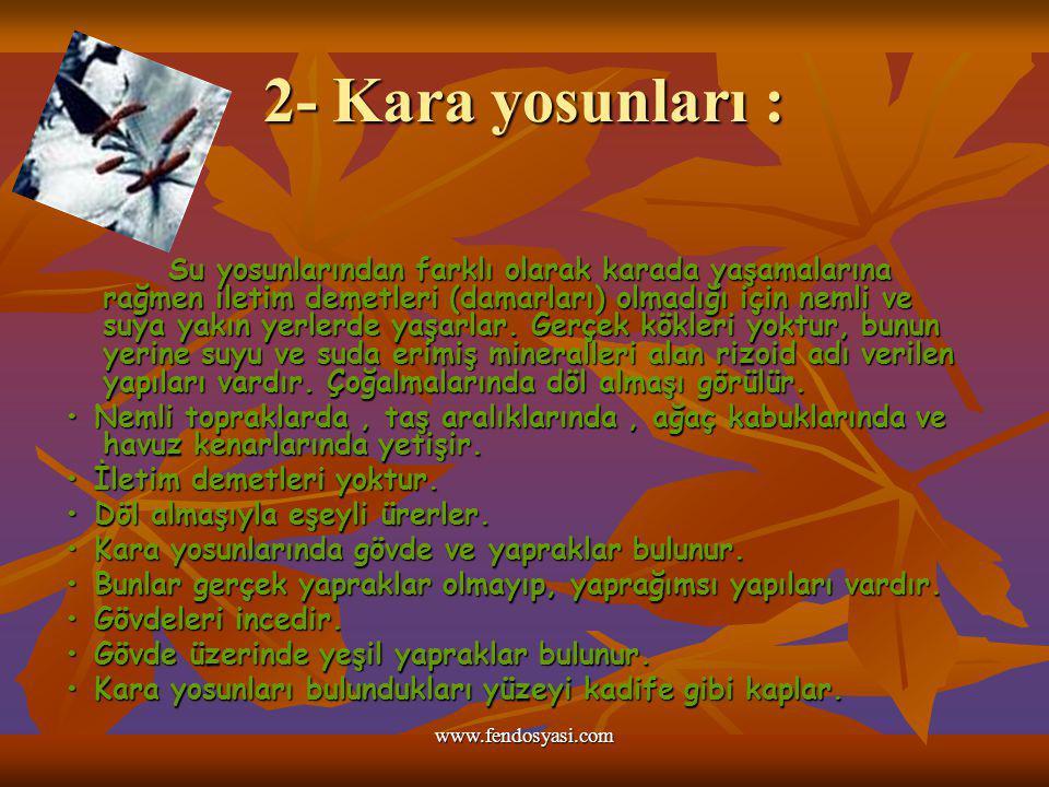2- Kara yosunları :