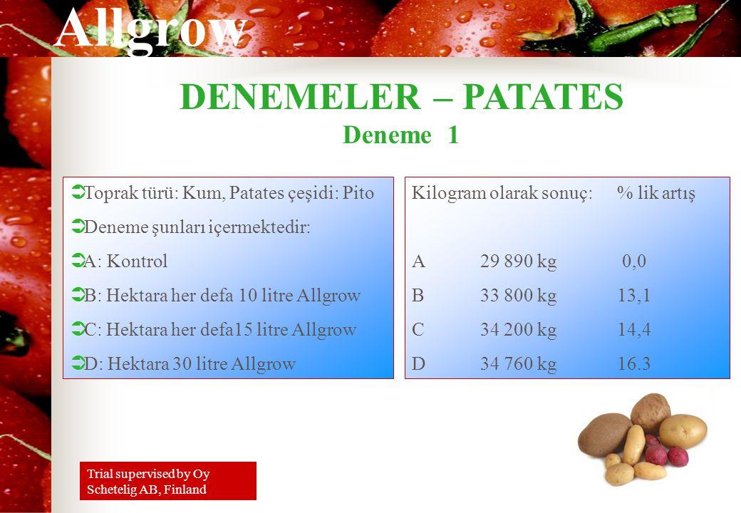 DENEMELER – PATATES Deneme 1 Toprak türü: Kum, Patates çeşidi: Pito