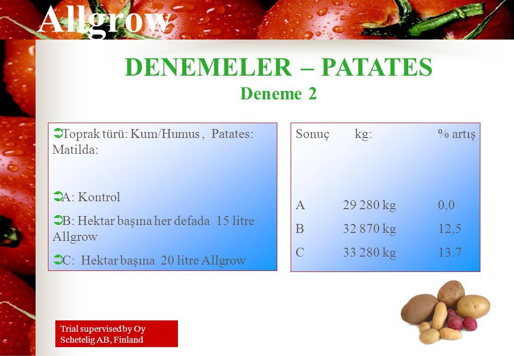 DENEMELER – PATATES Deneme 2