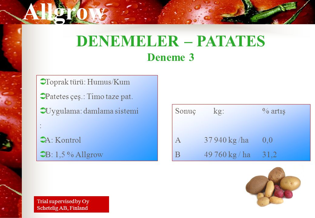 DENEMELER – PATATES Deneme 3 Toprak türü: Humus/Kum