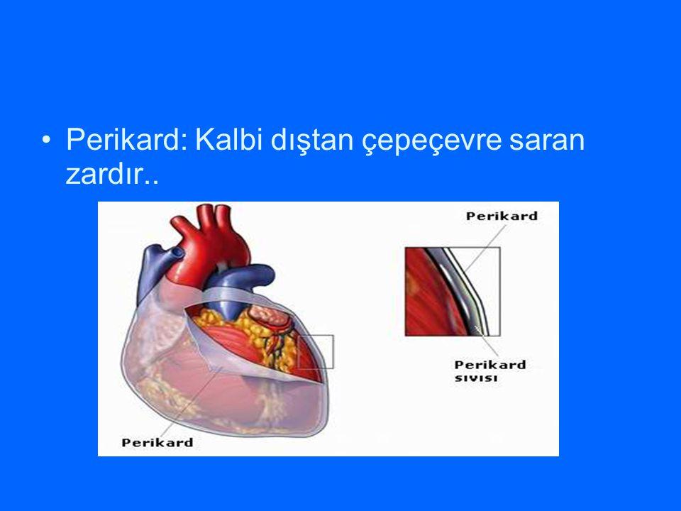 Perikard: Kalbi dıştan çepeçevre saran zardır..