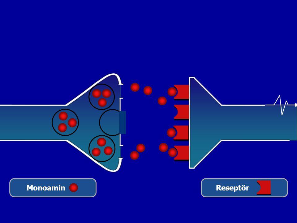 Monoamin Reseptör