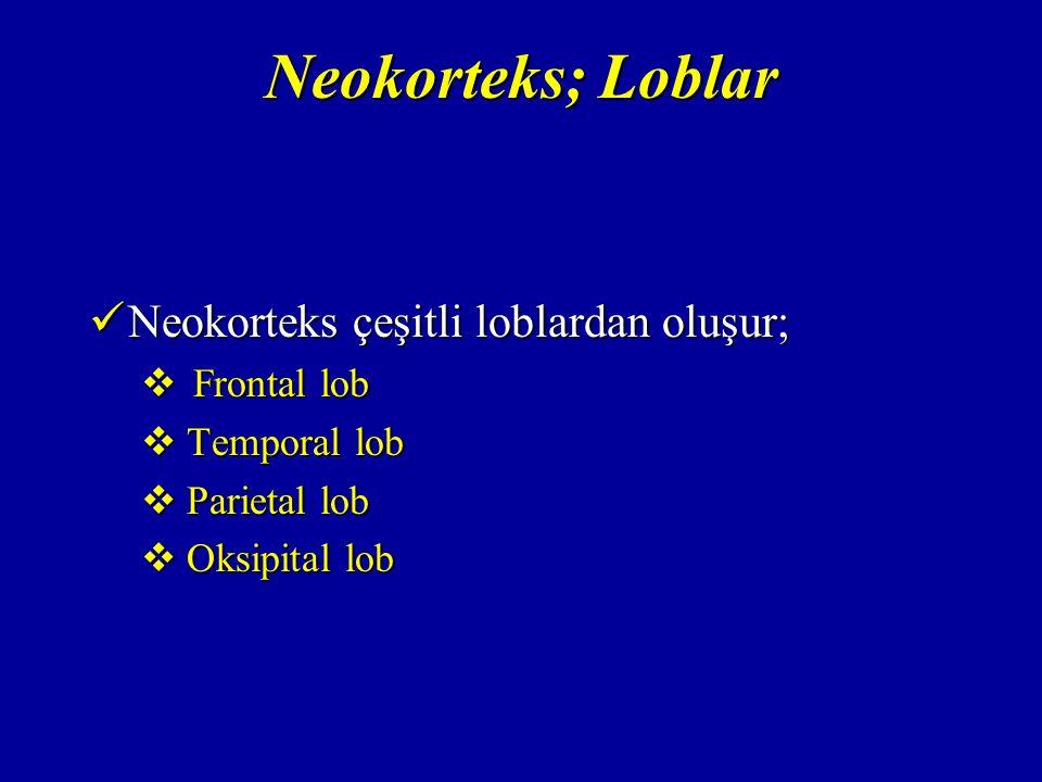 Neokorteks; Loblar Neokorteks çeşitli loblardan oluşur; Frontal lob