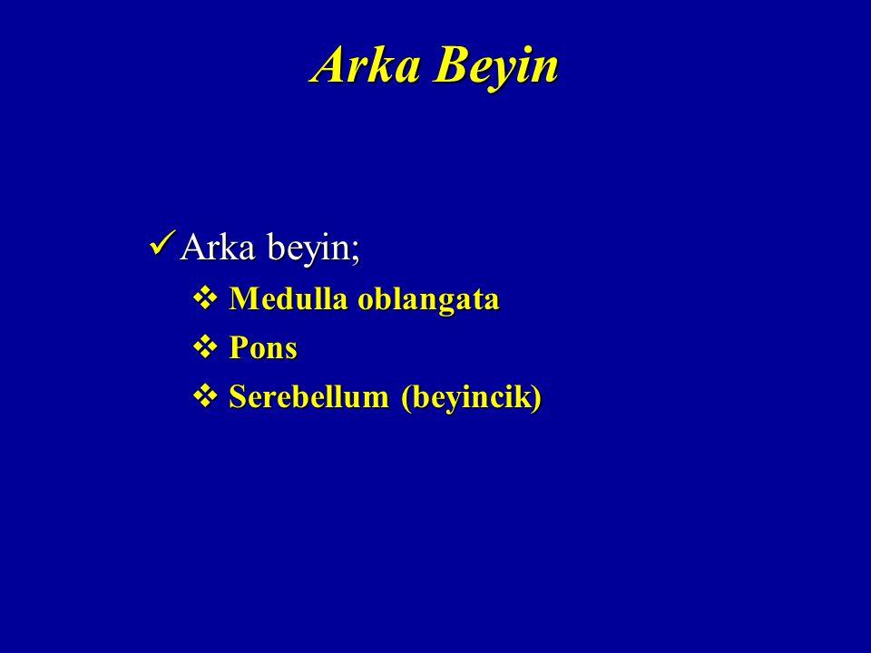 Arka Beyin Arka beyin; Medulla oblangata Pons Serebellum (beyincik)