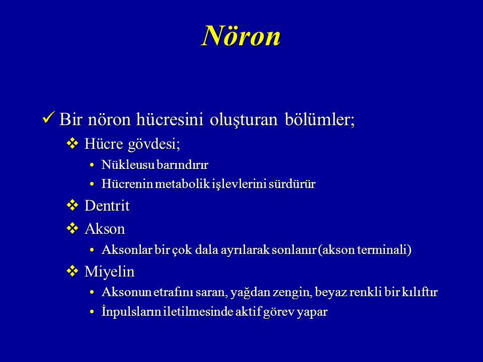 Nöron Bir nöron hücresini oluşturan bölümler; Hücre gövdesi; Dentrit