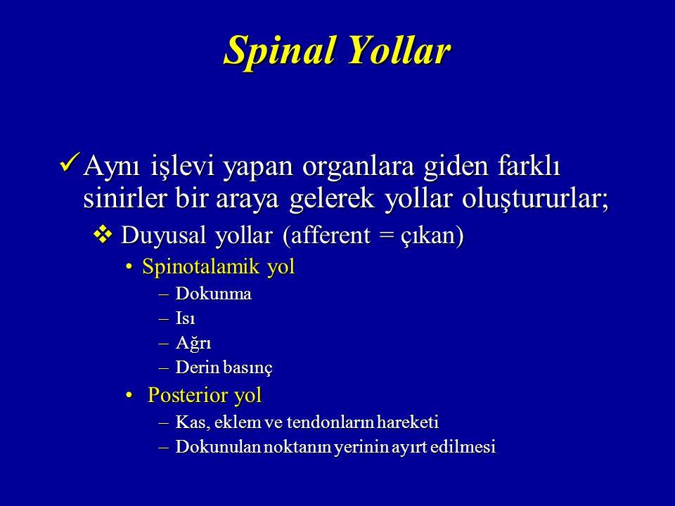 Spinal Yollar Aynı işlevi yapan organlara giden farklı sinirler bir araya gelerek yollar oluştururlar;