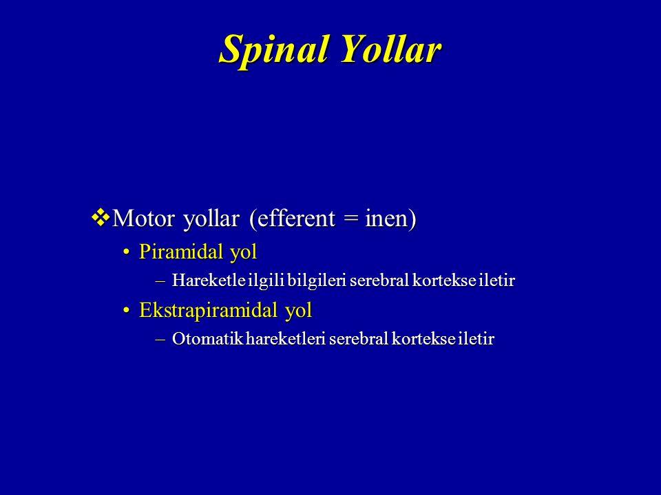 Spinal Yollar Motor yollar (efferent = inen) Piramidal yol