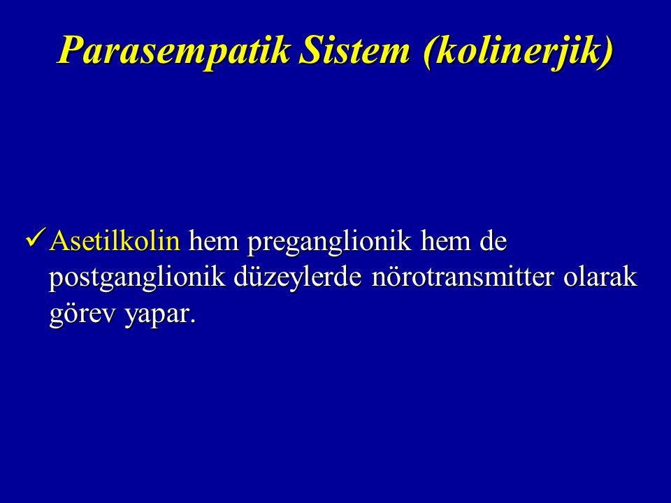 Parasempatik Sistem (kolinerjik)