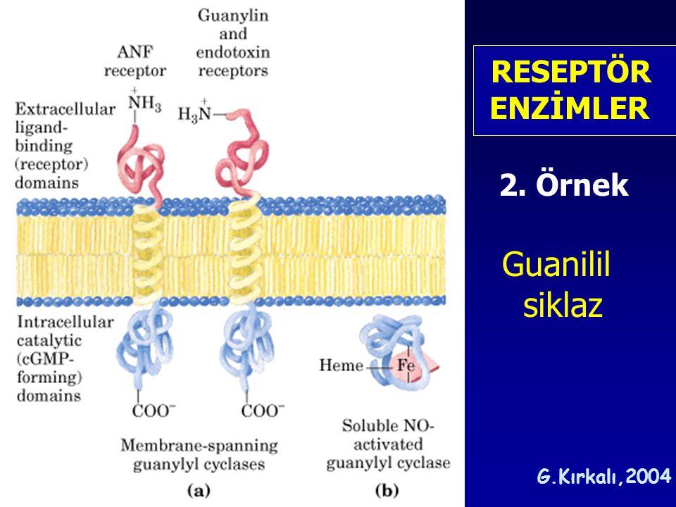 RESEPTÖR ENZİMLER 2. Örnek Guanilil siklaz G.Kırkalı,2004