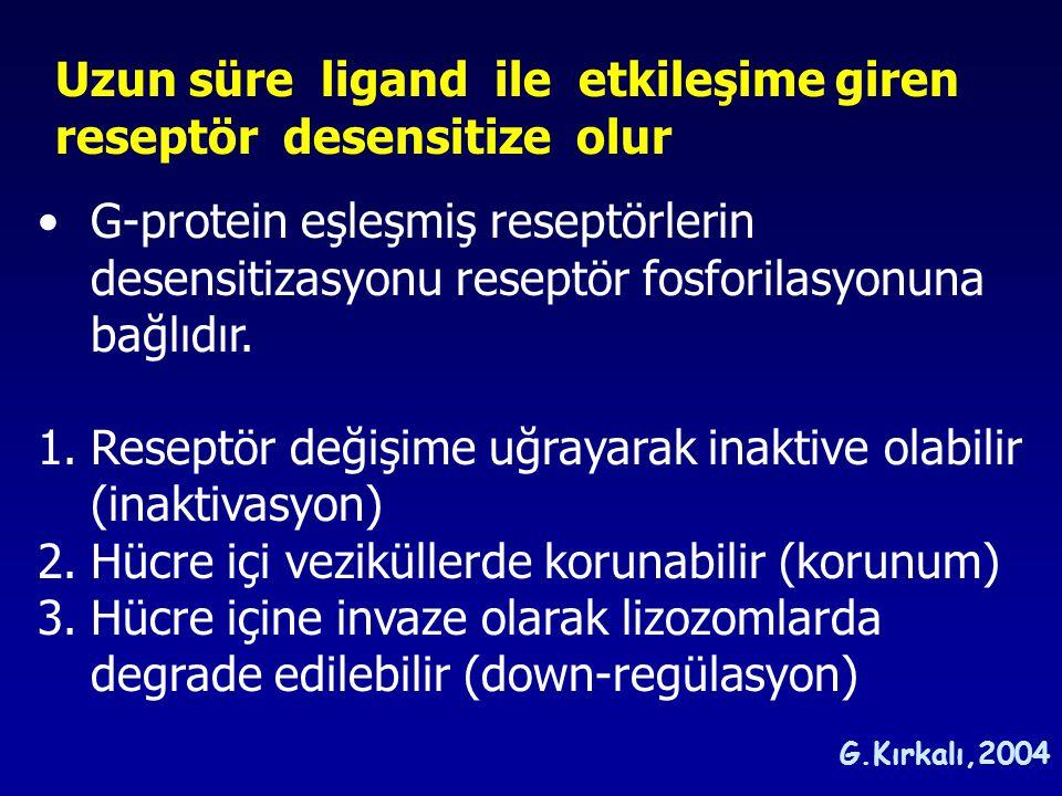 Uzun süre ligand ile etkileşime giren reseptör desensitize olur