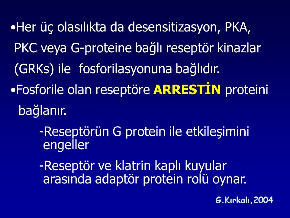 Her üç olasılıkta da desensitizasyon, PKA,