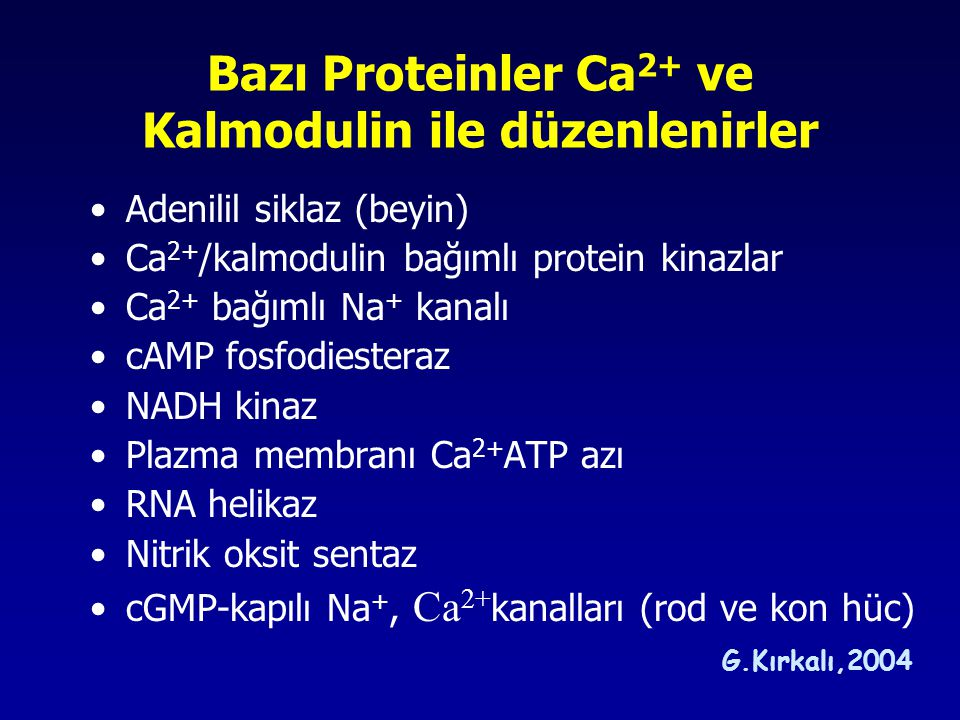 Bazı Proteinler Ca2+ ve Kalmodulin ile düzenlenirler