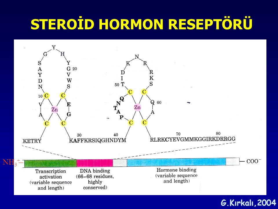 STEROİD HORMON RESEPTÖRÜ
