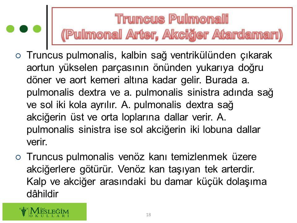 Truncus Pulmonali (Pulmonal Arter, Akciğer Atardamarı)