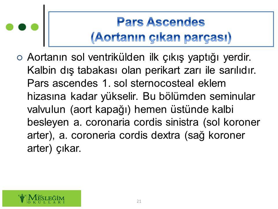 Pars Ascendes (Aortanın çıkan parçası)