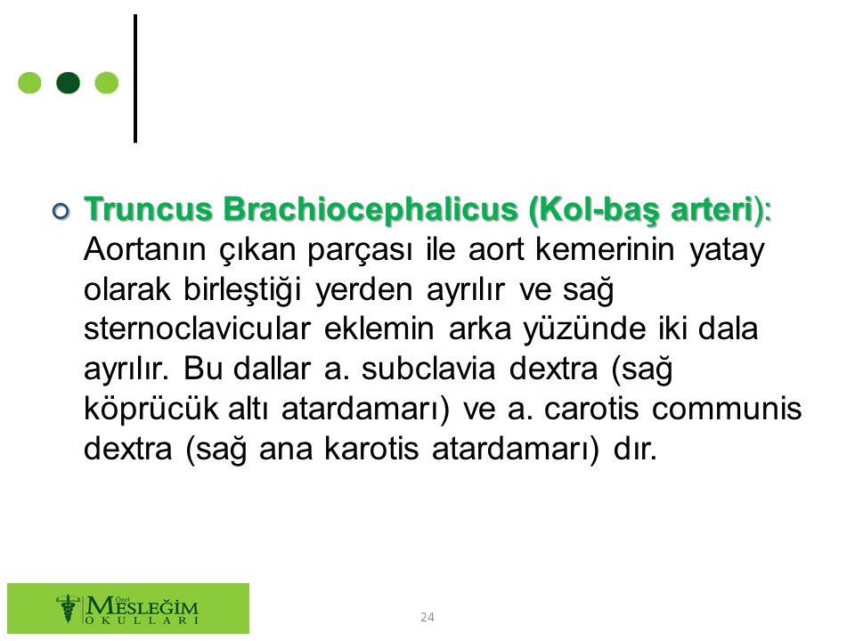 Truncus Brachiocephalicus (Kol-baş arteri): Aortanın çıkan parçası ile aort kemerinin yatay olarak birleştiği yerden ayrılır ve sağ sternoclavicular eklemin arka yüzünde iki dala ayrılır.