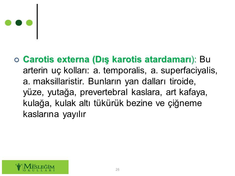 Carotis externa (Dış karotis atardamarı): Bu arterin uç kolları: a