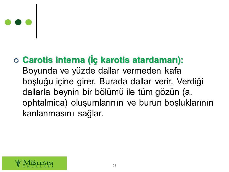 Carotis interna (İç karotis atardamarı): Boyunda ve yüzde dallar vermeden kafa boşluğu içine girer.