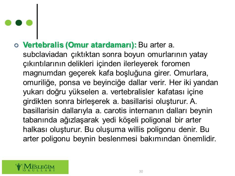 Vertebralis (Omur atardamarı): Bu arter a