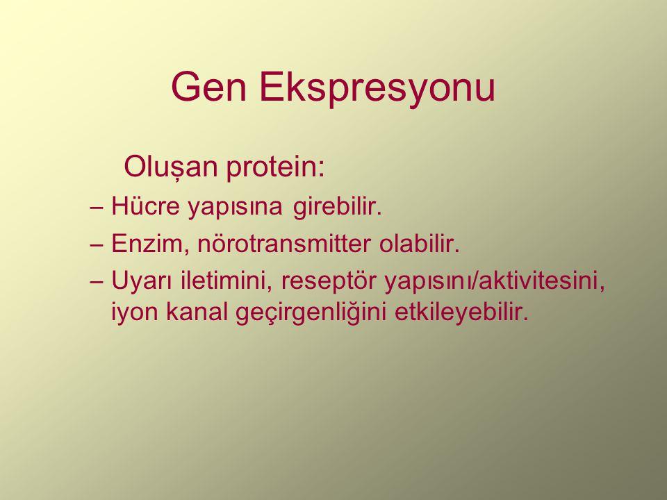 Gen Ekspresyonu Oluşan protein: Hücre yapısına girebilir.