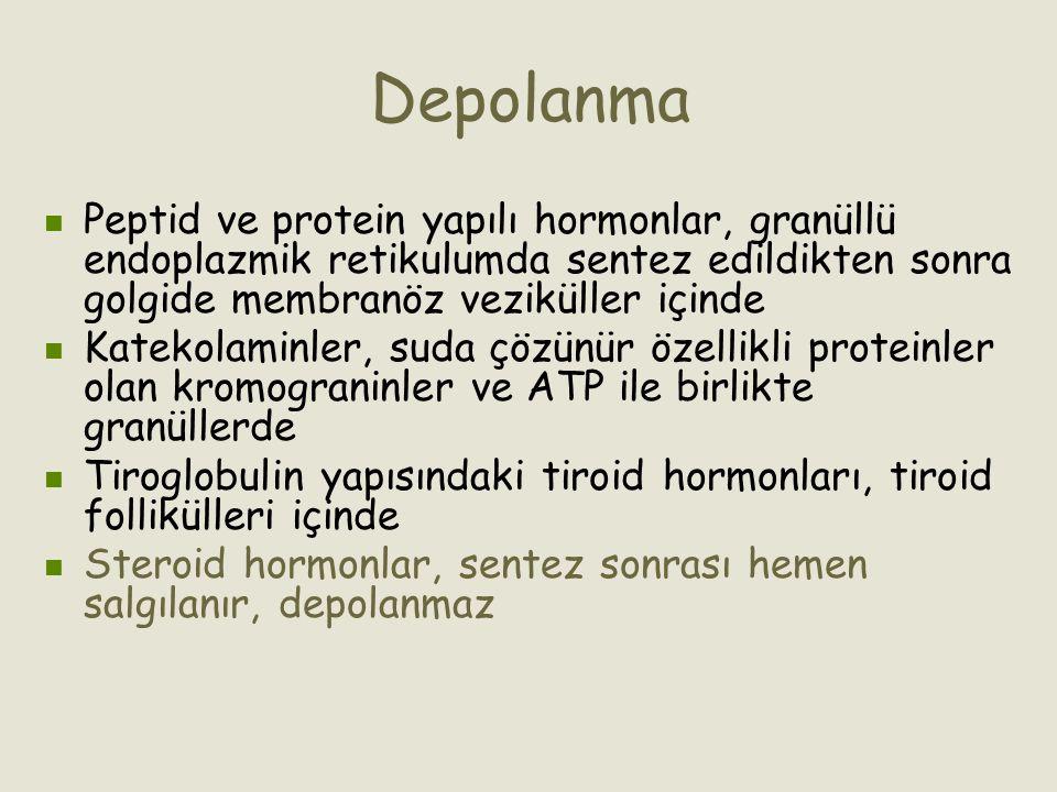 Depolanma Peptid ve protein yapılı hormonlar, granüllü endoplazmik retikulumda sentez edildikten sonra golgide membranöz veziküller içinde.