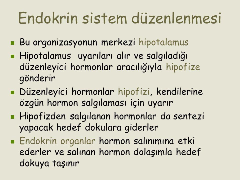 Endokrin sistem düzenlenmesi