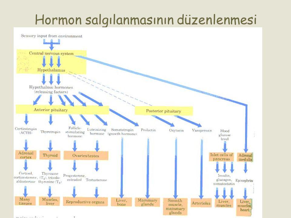 Hormon salgılanmasının düzenlenmesi