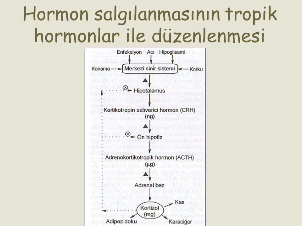 Hormon salgılanmasının tropik hormonlar ile düzenlenmesi