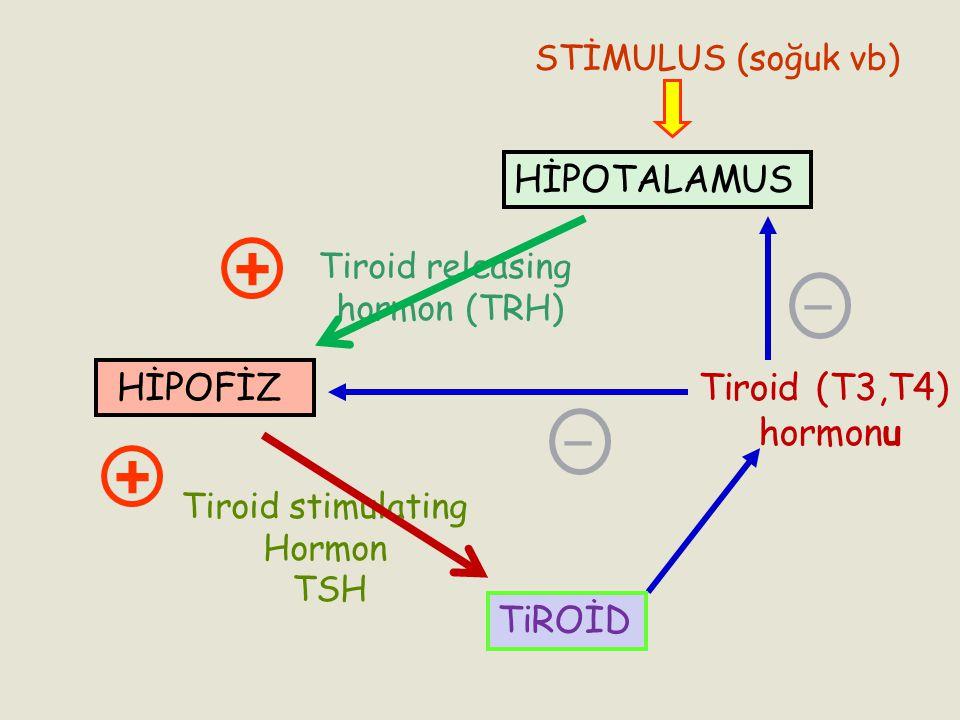 + + _ _ HİPOTALAMUS HİPOFİZ Tiroid (T3,T4) hormonu TiROİD