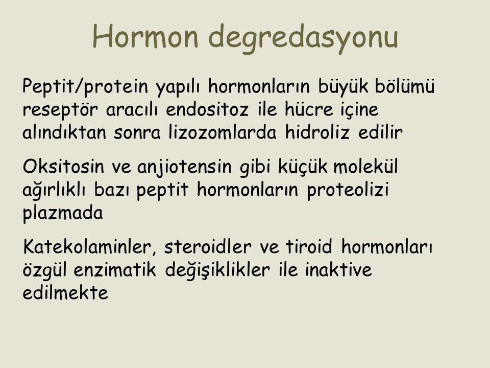 Hormon degredasyonu