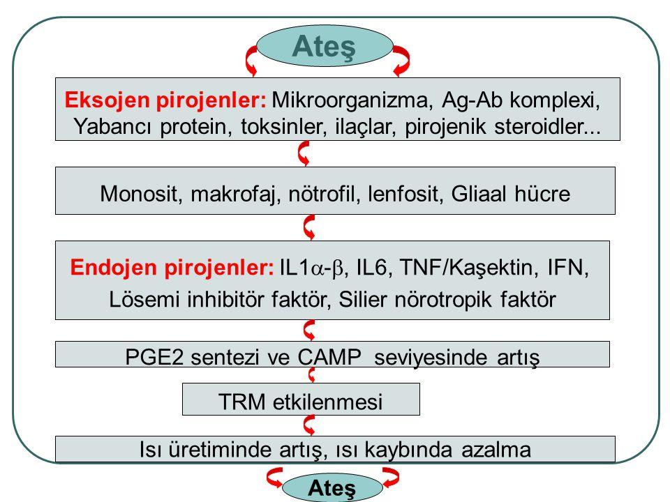 Ateş Eksojen pirojenler: Mikroorganizma, Ag-Ab komplexi,