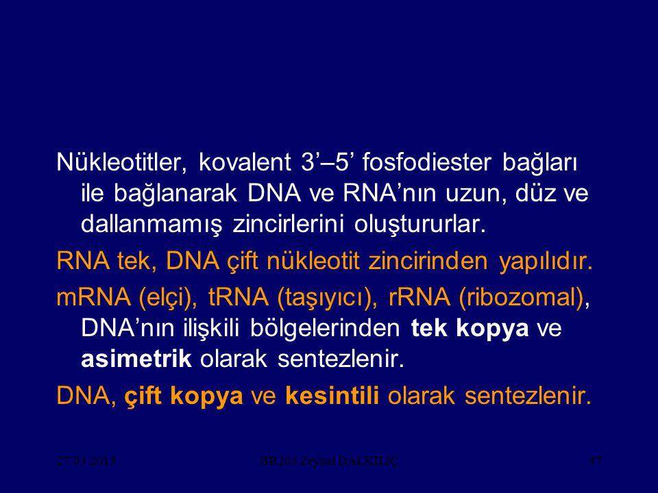 RNA tek, DNA çift nükleotit zincirinden yapılıdır.
