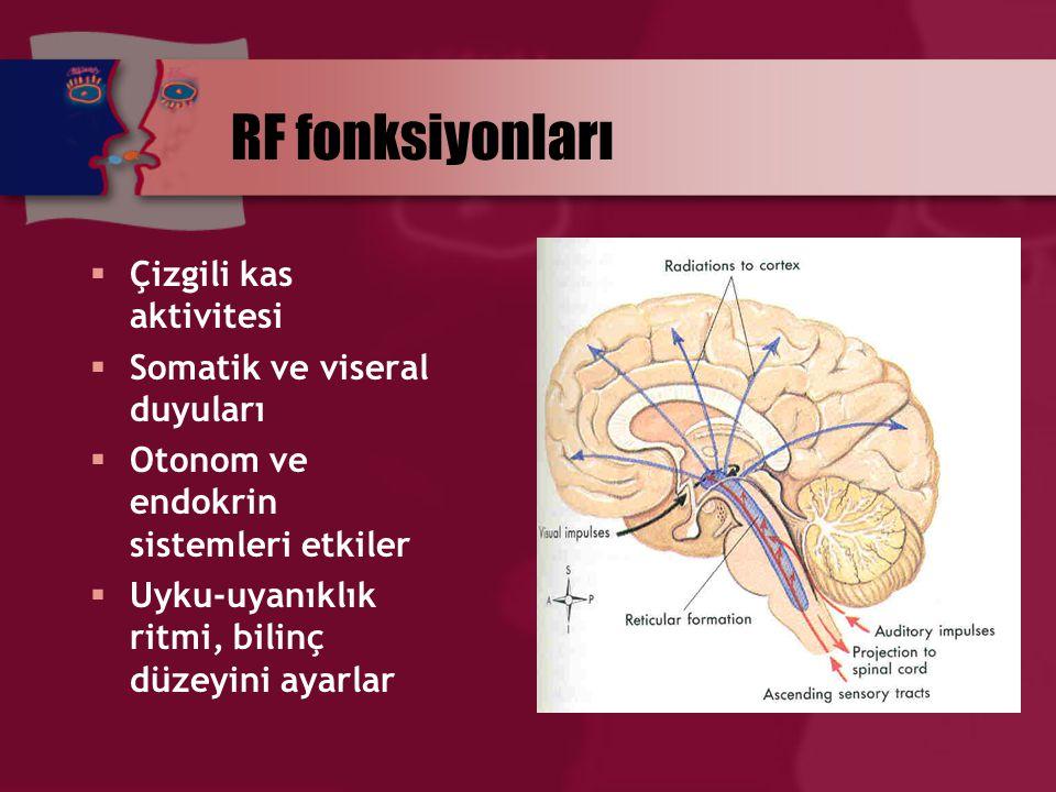 RF fonksiyonları Çizgili kas aktivitesi Somatik ve viseral duyuları