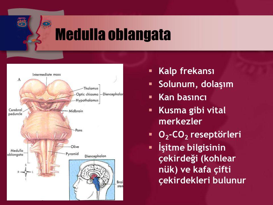 Medulla oblangata Kalp frekansı Solunum, dolaşım Kan basıncı