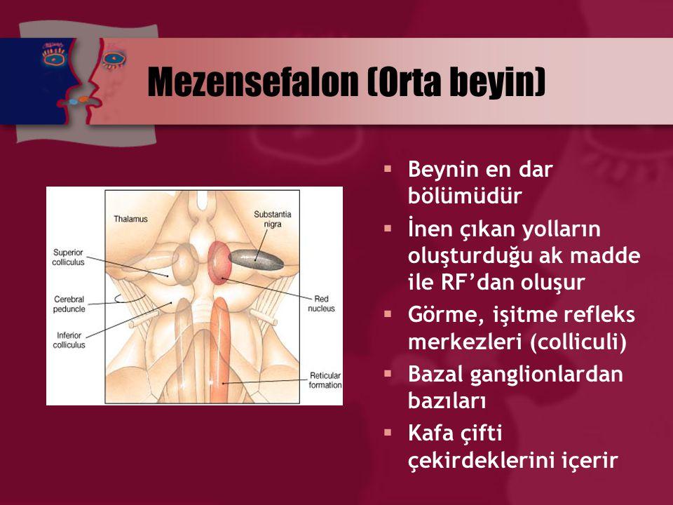 Mezensefalon (Orta beyin)