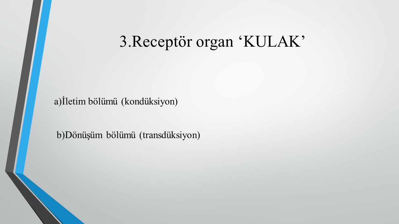 3.Receptör organ 'KULAK'
