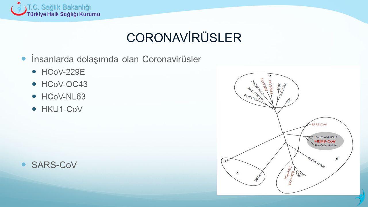 CORONAVİRÜSLER İnsanlarda dolaşımda olan Coronavirüsler SARS-CoV