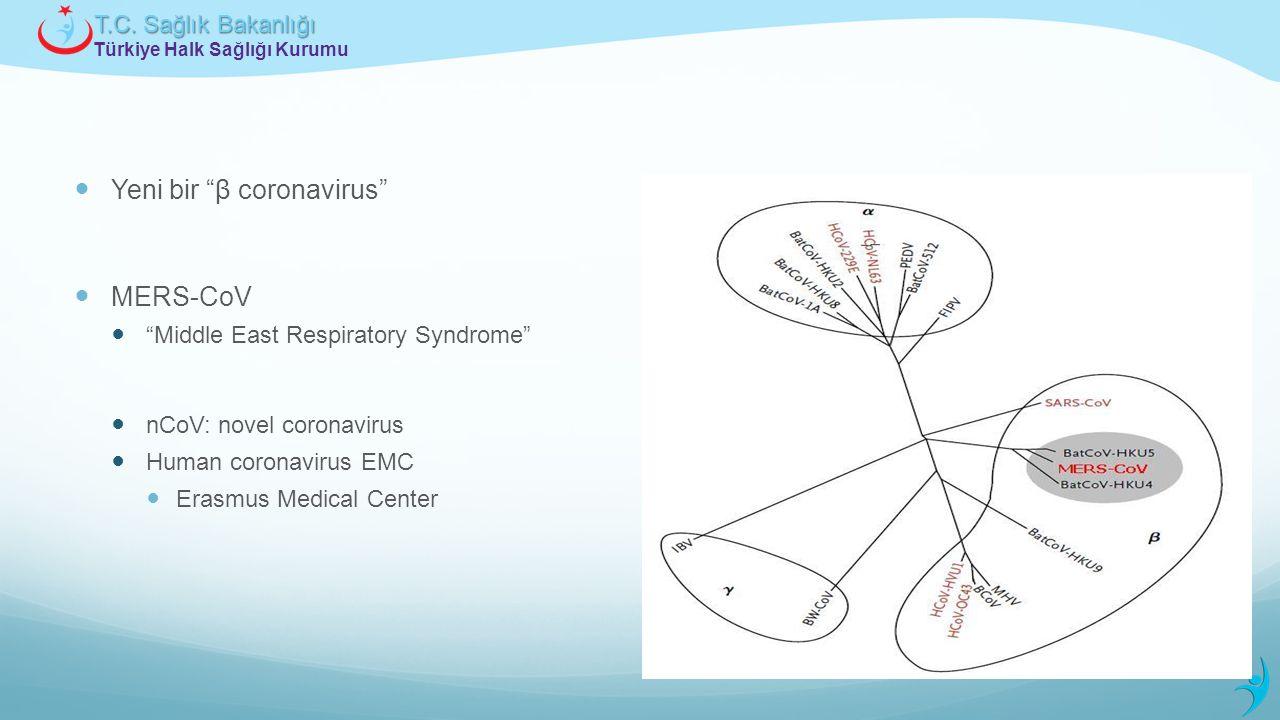 Yeni bir β coronavirus