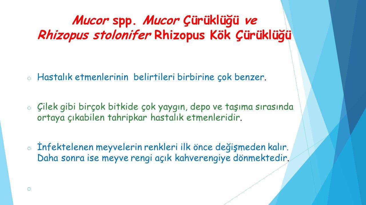 Mucor spp. Mucor Çürüklüğü ve Rhizopus stolonifer Rhizopus Kök Çürüklüğü