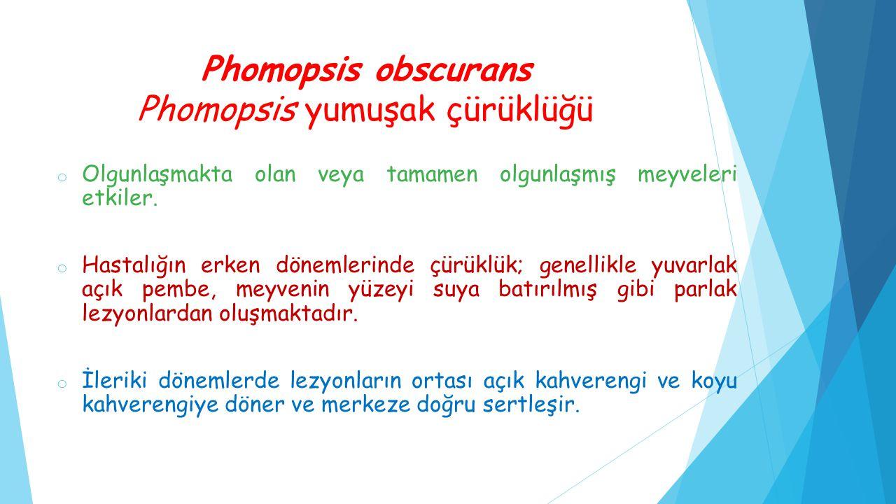 Phomopsis obscurans Phomopsis yumuşak çürüklüğü