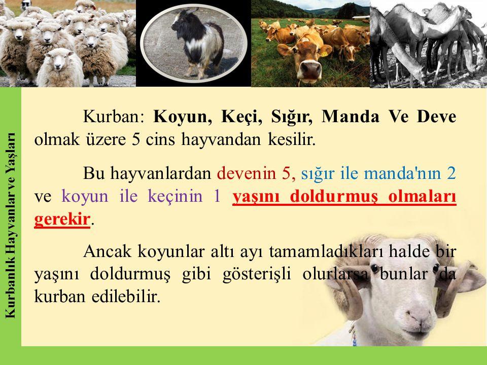 Kurbanlık Hayvanlar ve Yaşları
