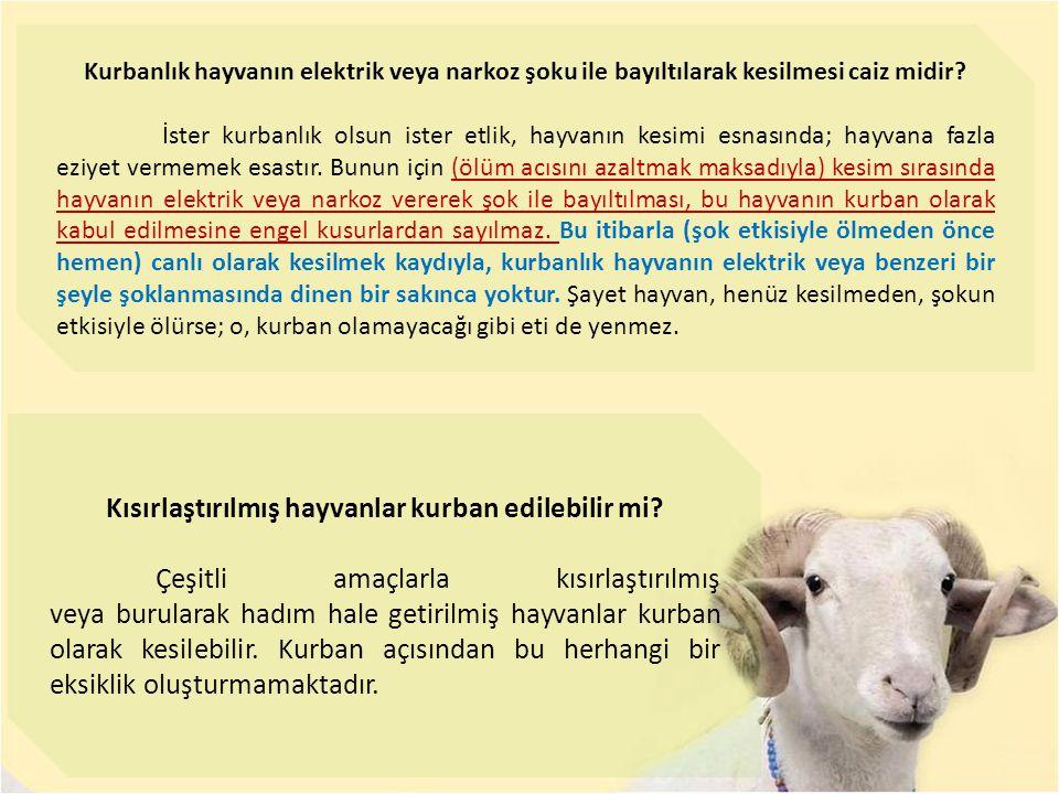 Kısırlaştırılmış hayvanlar kurban edilebilir mi