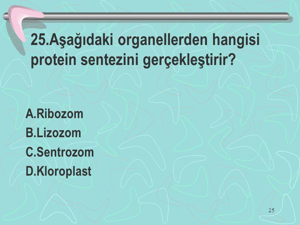 25.Aşağıdaki organellerden hangisi protein sentezini gerçekleştirir