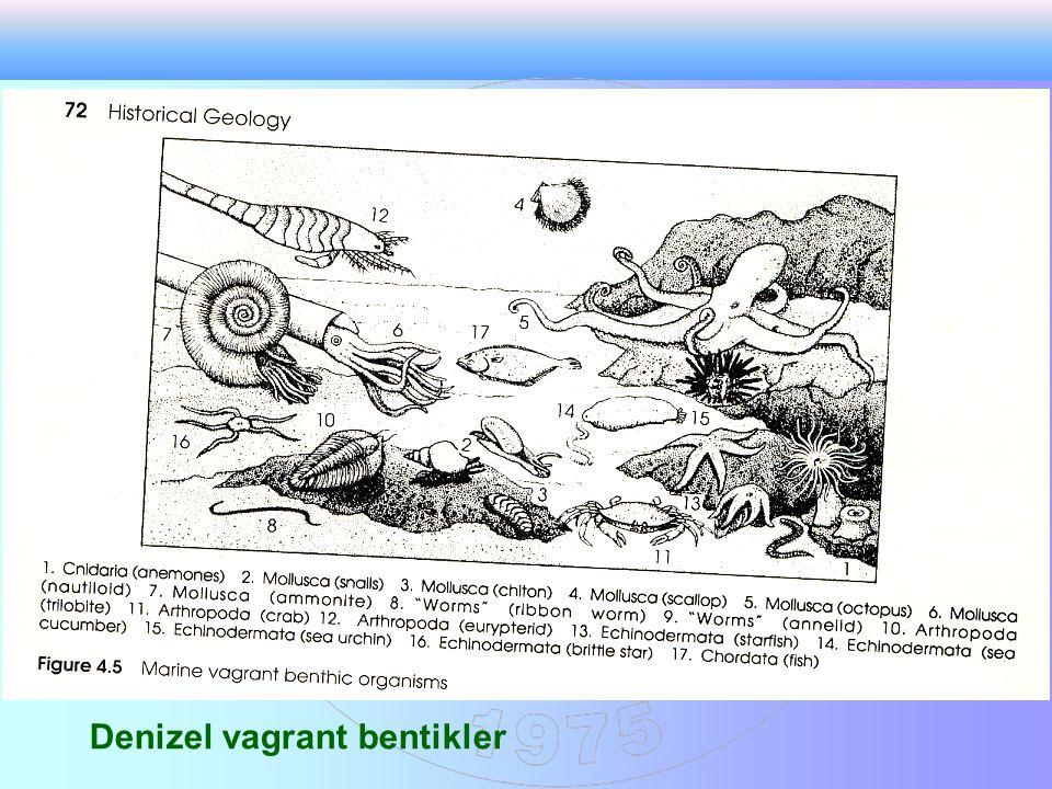 Denizel vagrant bentikler