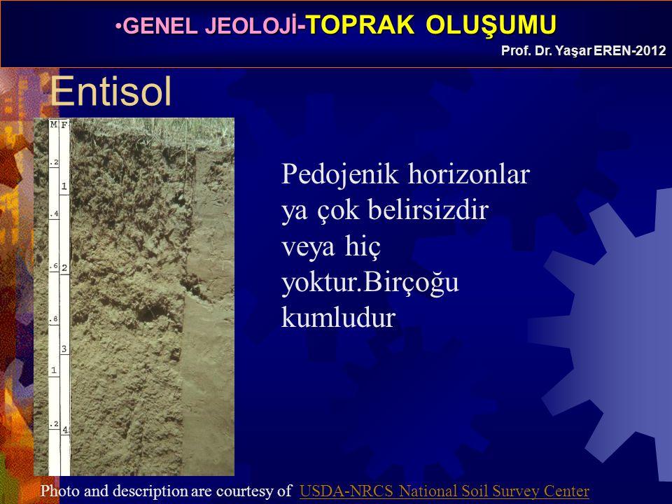 Entisol Pedojenik horizonlar ya çok belirsizdir veya hiç yoktur.Birçoğu kumludur.