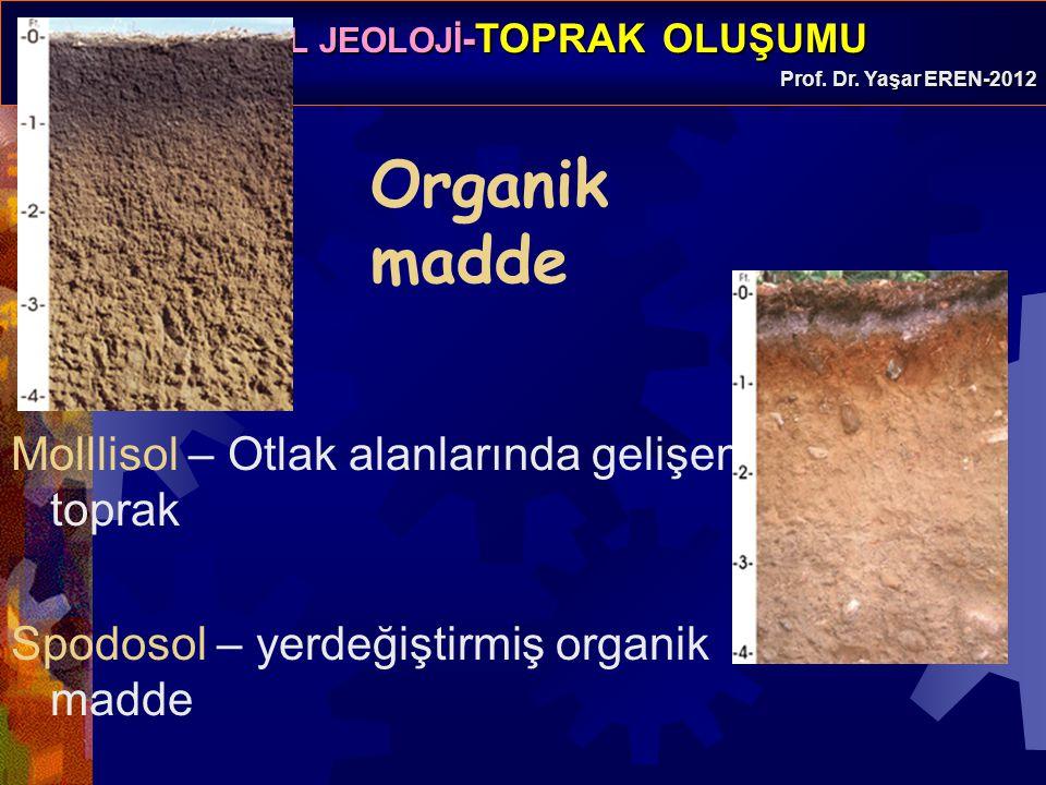 Organik madde Molllisol – Otlak alanlarında gelişen toprak
