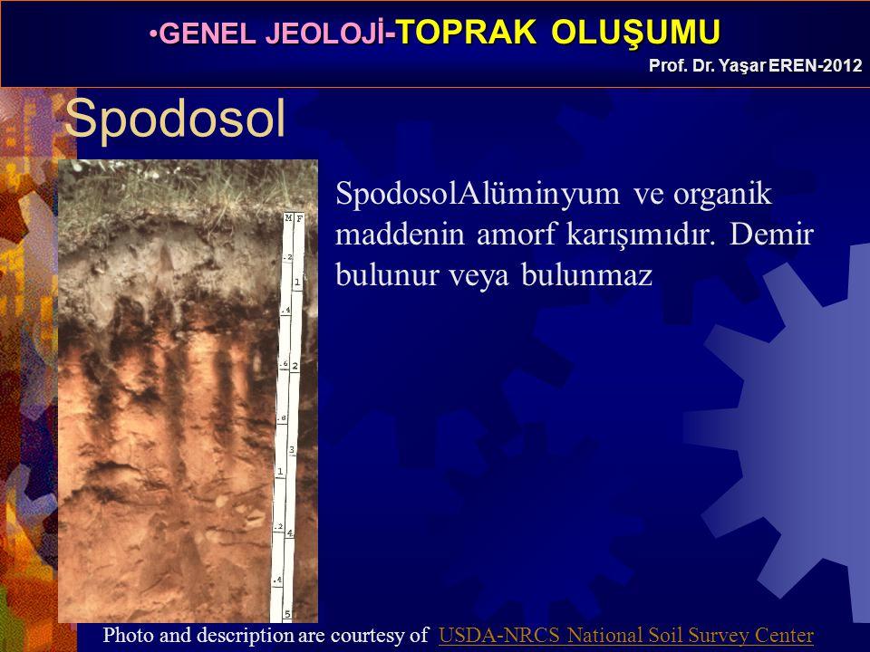 Spodosol SpodosolAlüminyum ve organik maddenin amorf karışımıdır. Demir bulunur veya bulunmaz.