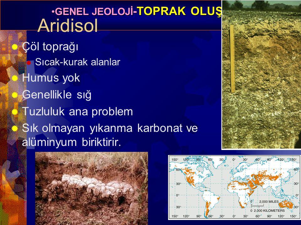 Aridisol Çöl toprağı Humus yok Genellikle sığ Tuzluluk ana problem
