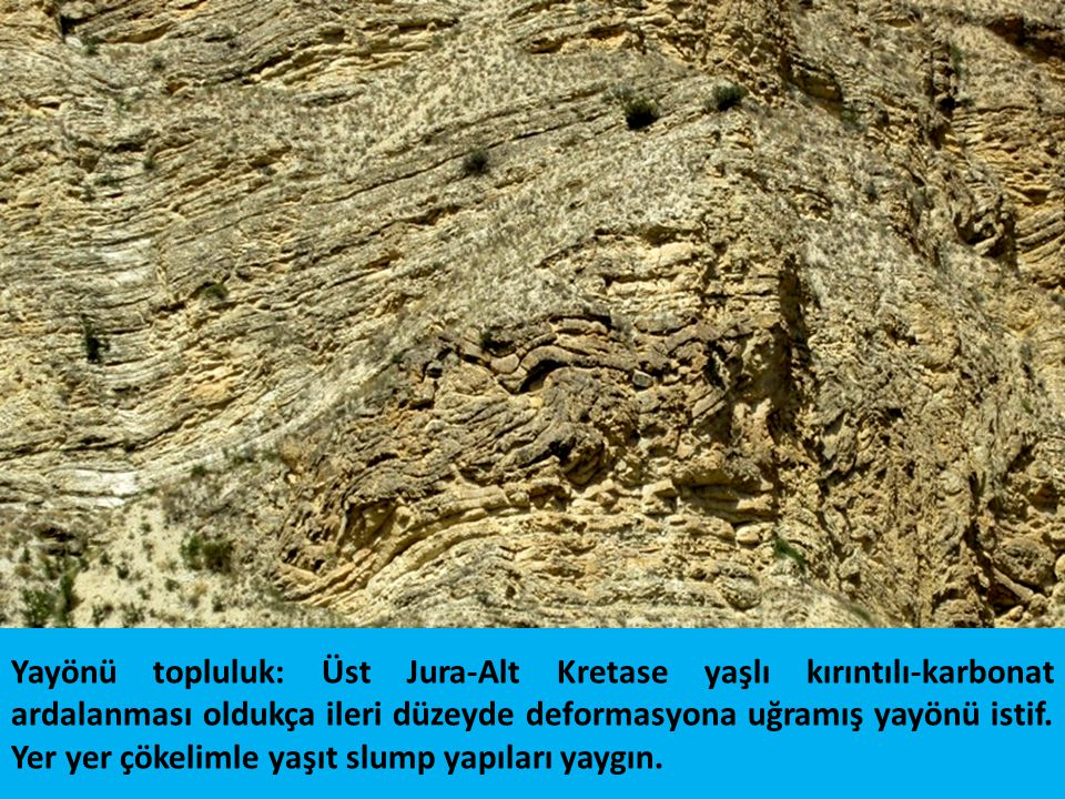 Foto 186: Olur güneyi Üst Jura-Alt Kretase yaşlı kırıntılı-karbonat ardalanması oldukça ileri düzeyde deformasyona uğramış yayönü istif. Yer yer çökelimle yaşıt slump yapıları yaygın.